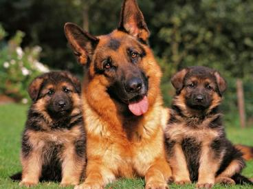 Día del Perro: la historia que insipiró a conmemorar a los animales más queridos - ElDoce.tv