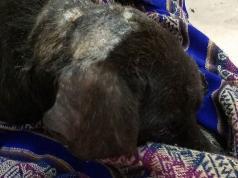 perro-rescate-policias-cordoba-barrio-san-martin-ciego-abandonado-atropellado
