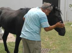 caballo-ciro