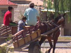 carreros cordoba municipalidad carro caballo