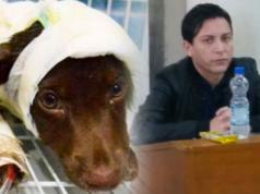 chocolate-perro-despellejado-acusado-juicio-carcel