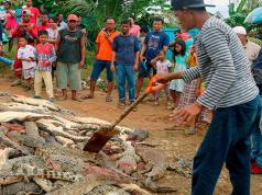 cocodrilos-venganza-indonesia-muerte.jpg