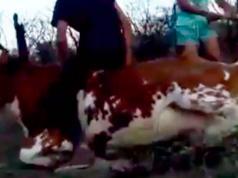 golpearon-vaca-maltrato-animal-zona-rural-las-achiras-valle-de-traslasierra