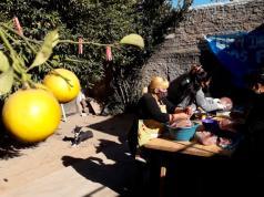 limonero-barrio-ferrer