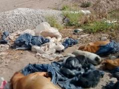 maltrato-animal-perros-muertos-abandonados-descampado-cordoba