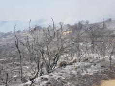 incendios cordoba bomberos