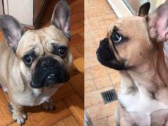turistas-carlos-paz-robo-perro-bulldog-frances-inseguridad-cordoba.jpg