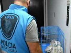 gatos-hacinados-policia-villa-crespo