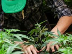 cultivador-marihuana-allanamiento-chubut