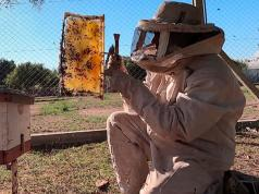 apicultor-abejas-incendios-norte-cordobes
