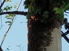 enjambre-abejas-cordoba