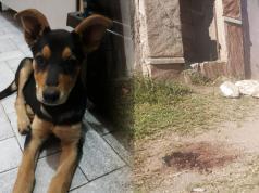 asesino-perra-barrio-ituzaingo