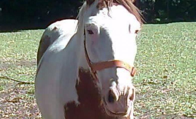 Sanan, ayudan y recuperan a caballos de la calle.