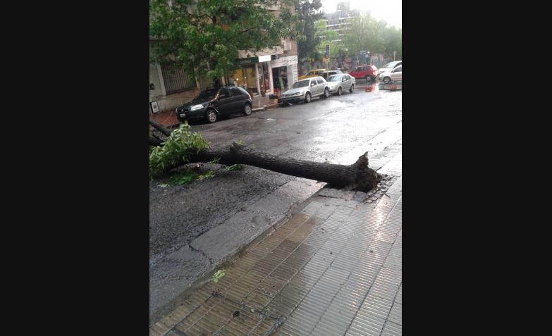 Nueva Córdoba, algunas calles con árboles caídos.