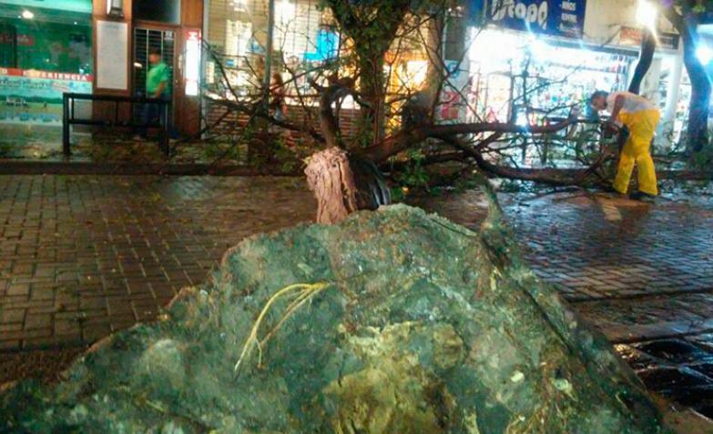 Árbol caído Carlos Paz