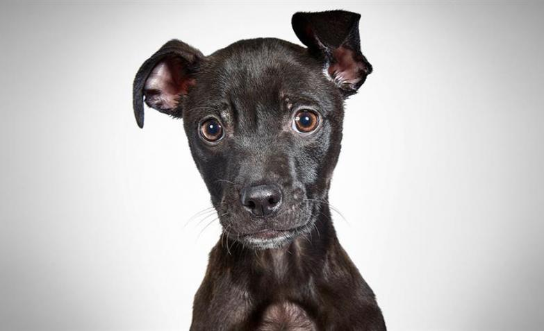 Perros rescatados