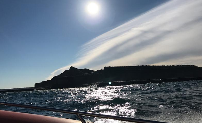 Avistaje Península Valdés