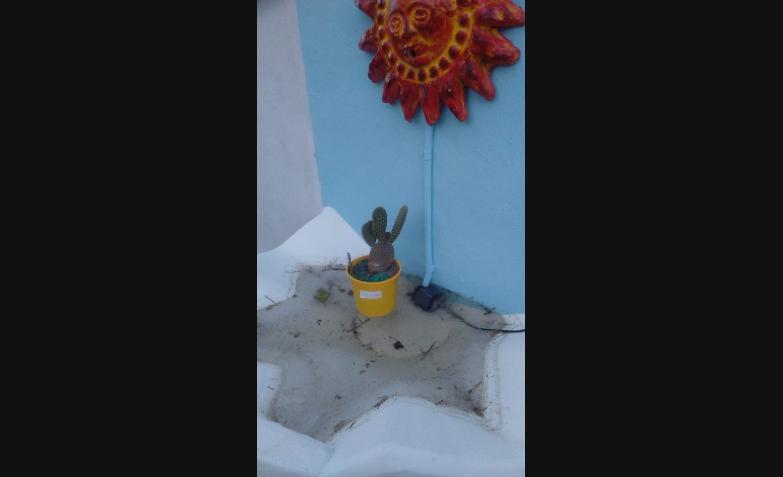 En Villa Carlos Paz patios y jardines de hielo. Fotos de Hugo.