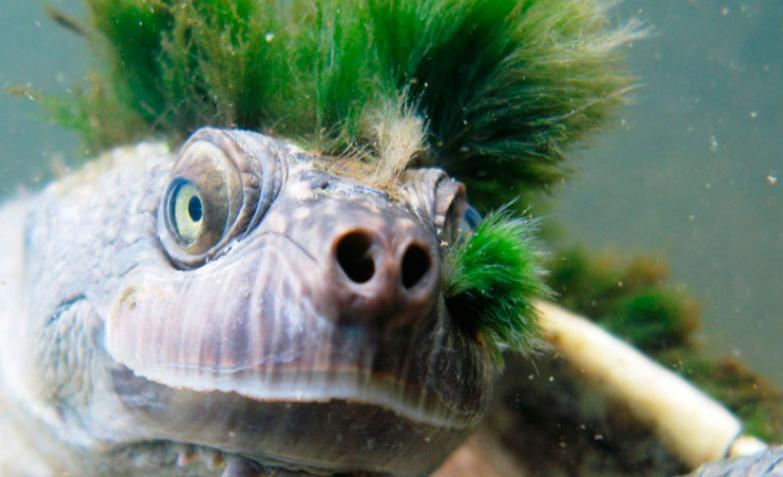 Tortuga-punk-australia