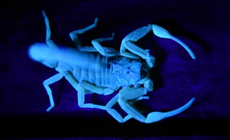 territorio alacranes mendiolaza escorpiones el talar