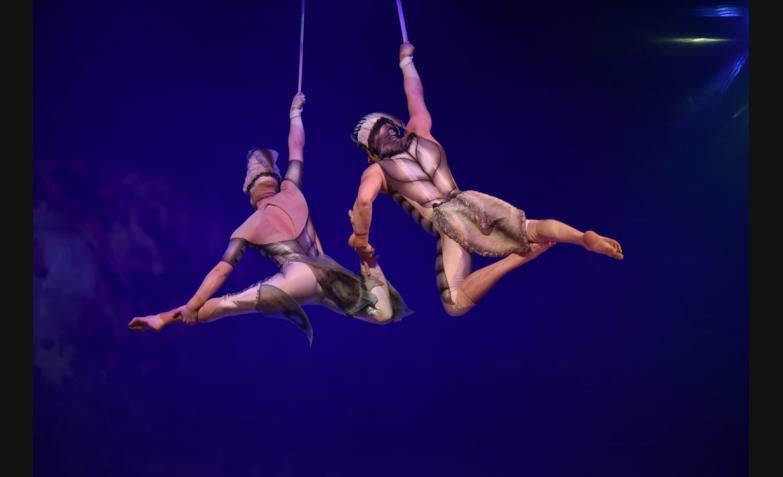 cirque du soleil ovo cordoba