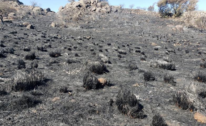 incendio caballos sacrificados cordoba sierras