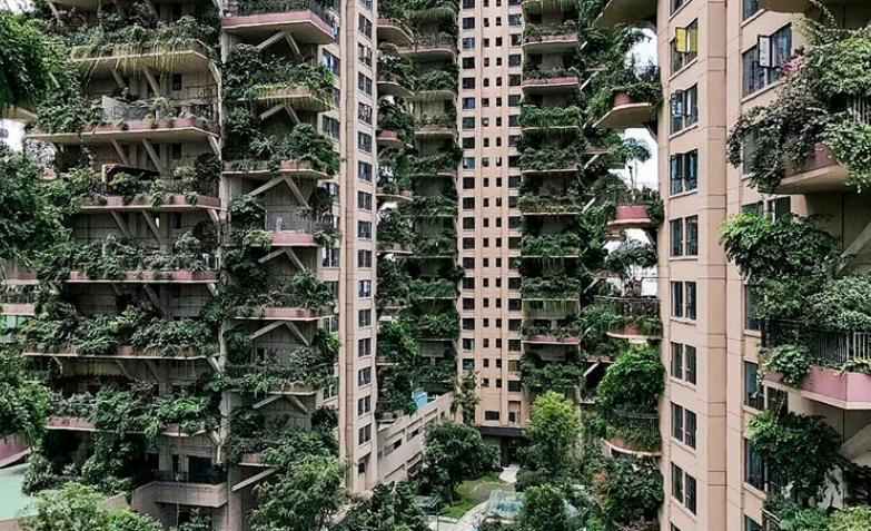 bloques-ecologicos-china-plantas-mosquitos