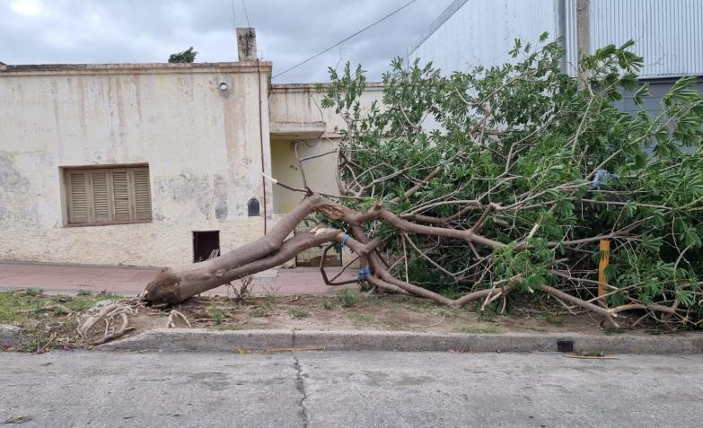 viento-sur-destrozos-cordoba