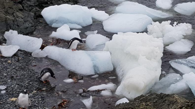 antártida el doce cumpleaños pinguinos festejos base esperanza