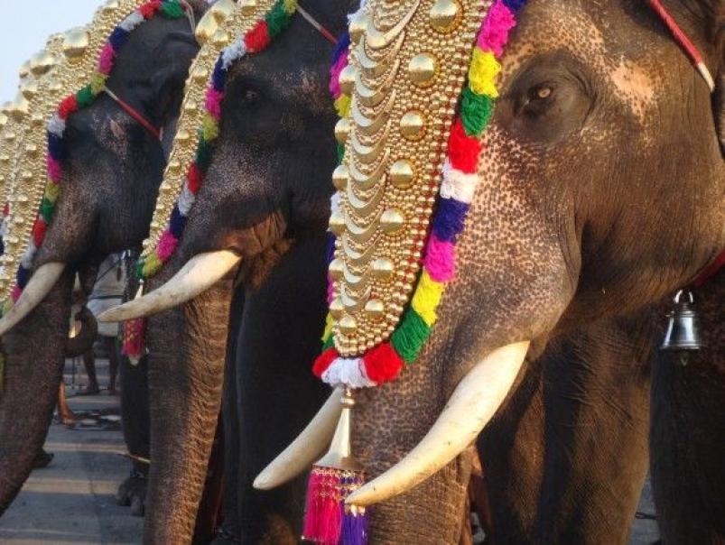 elefante mata a su dueño
