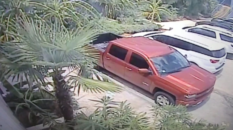 Sujetos se roban tiburón del acuario de San Antonio