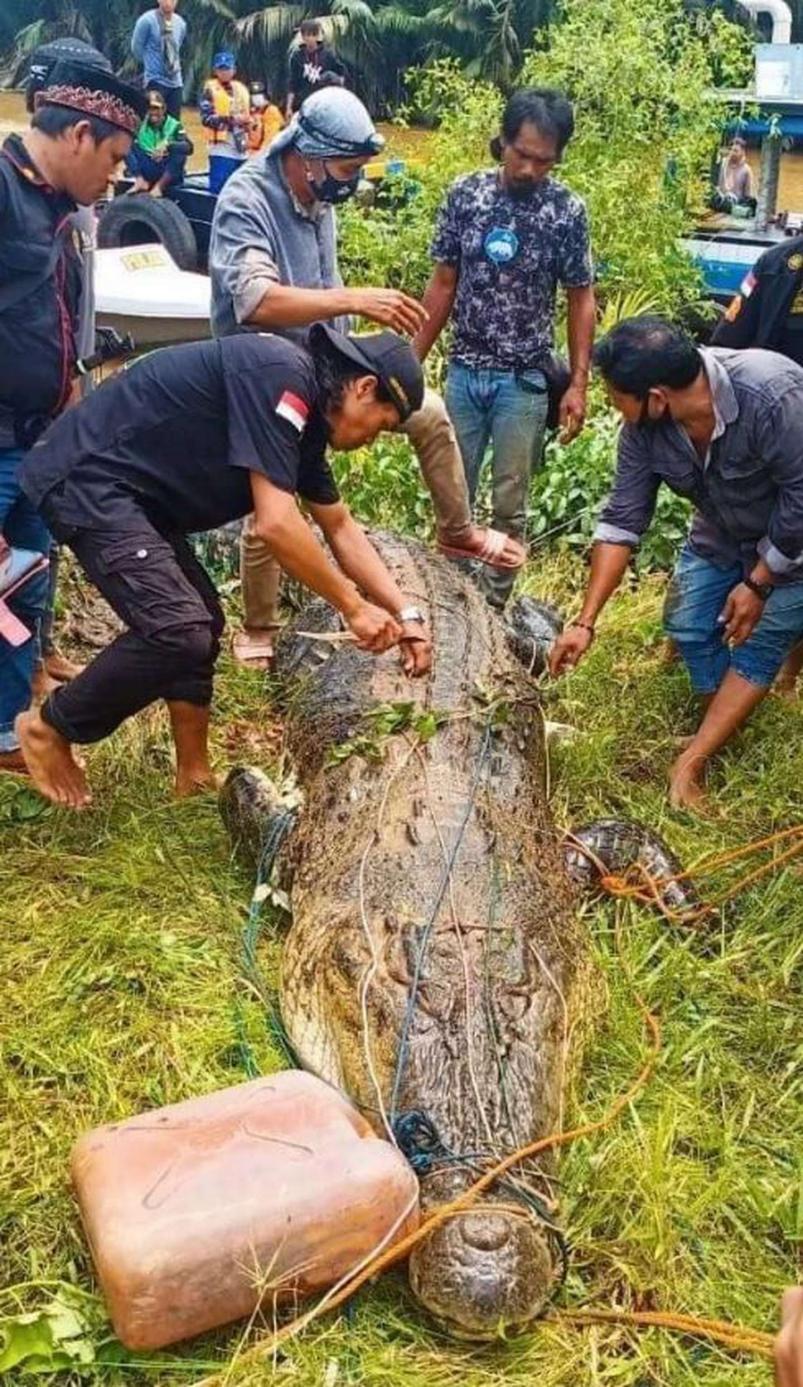 Sacaron el cuerpo de un nene de 8 años del vientre de un cocodrilo gigante  - ElDoce.tv
