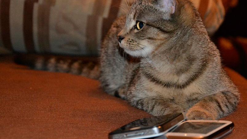 Usaban gatos para ingresar celulares a la cárcel — Insólito