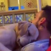 Perro pide perdón