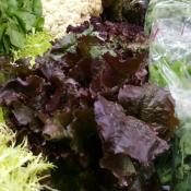 verduras de hoja aumento