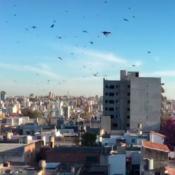 langostas-cordoba-invasion-plaga-ataque-barrios