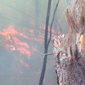 Alerta-Roja-Informe-Lalo-Freyre-Incendios-Córdoba-Fuego-Llamas-Sierras-Impuesto-al-Fuego-Bomberos-Gobierno-de-la-Provincia (2)