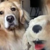 perro-peluche-ataque-celos-enojo-virales-redes-sociales
