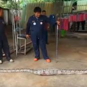 Tailandia-Patio-Casa-Suelo-Sorpresa-Víbora-Serpiente-Pitón-Cemento-Animal-Reptil- Lagarto-Uraiwan-Seksuk