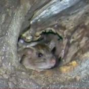 ratas plaza san martín córdoba mugre