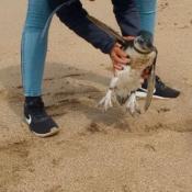 pinguino-casa-cordoba-sancion-ambiente.jpg