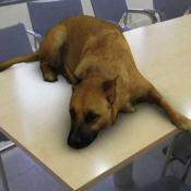 perro filtro instagram furor
