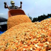 exportacion maiz
