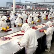 frigorificos carne precio