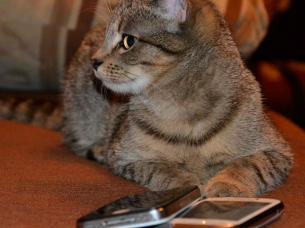 gatos celulares